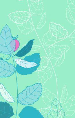 rosehip illustrated design