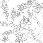 blossom line drawing by ArtCare
