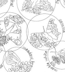 outline drawings of different butterflies to colour in