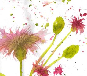 textured pink red flower in watercolour, with some buds