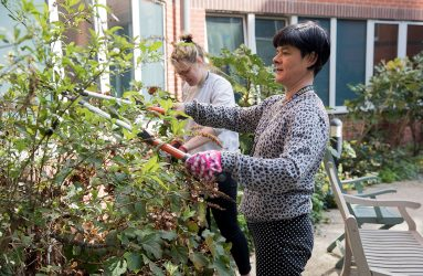 Volunteers trimming bushes