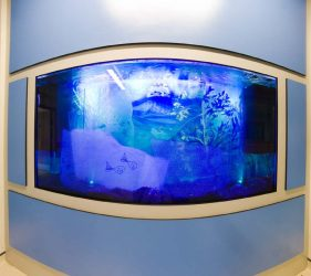 View of whole tank featuring art glass designs with fish outlines backdrop