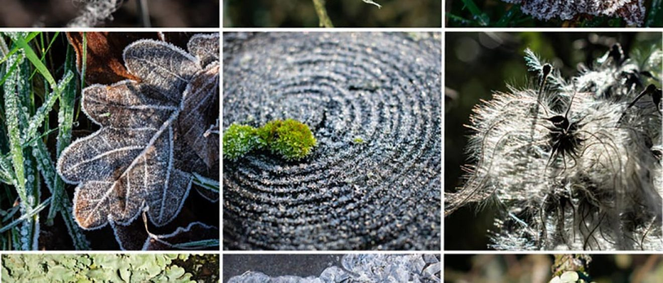 montage of close ups of frosty leaves, tree rings, old man's beard, lichen and sheep's wool