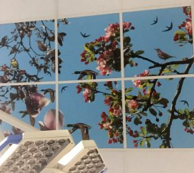 printed design on ceiling tiles of various types of bird hidden amongst pink tree blossom pictured against a blue sky
