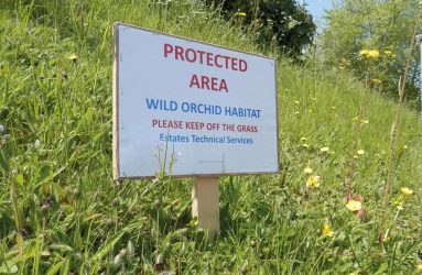 sign on verge saying 'Wild Orchid habitat, please keep off grass'