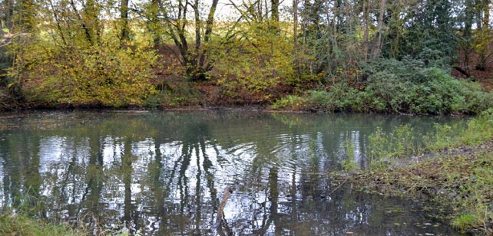 photo of river view, still water, tree reflected in water