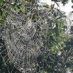photo of dew covered spider webs on bush