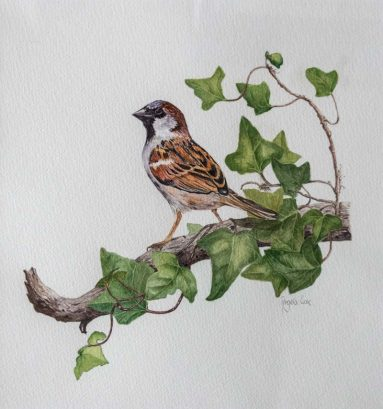 detailed, naturalistic watercolour of sparrow on branch with ivy