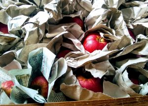 red apples loosely wrapped in newspaper