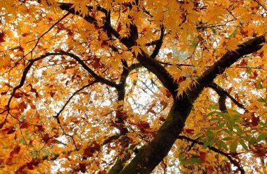tree with leaves turned orange