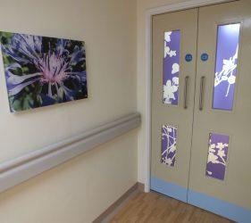 Print of close up of flower head on acrylic, corridor artwork