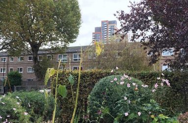Flowers in foreground, with tree and block of flats in background