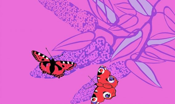 digital drawing of butterlies on buddleia on bright pink background