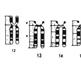 diagram showing human chromosome pairs