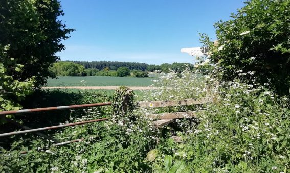 stile leading over hedge into field, blue sky
