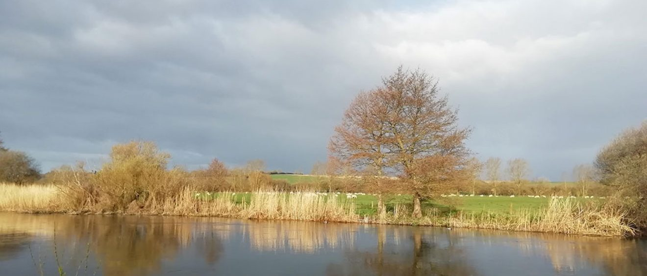 river at Downton, sheep in field, tree growing on the bank, dark cloud sky