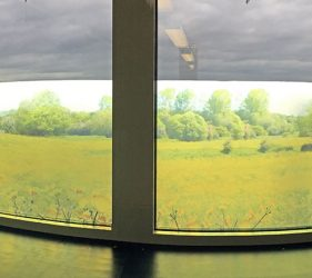 window film design of field of yellow flowers and buttercups