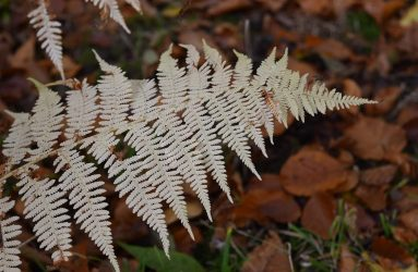 close up of fern, pale brown