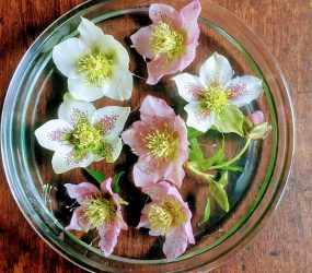 pink and white flower heads arranged in bowl