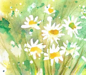white daisies against a yellow and green background