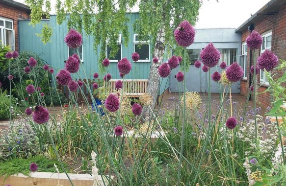 purple flower heads in raised bed in hospital courtyard area