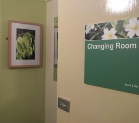Framed photo of beech leaves on changing room wall, new door sign with flower image
