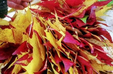 red and yellow leaves bunched together