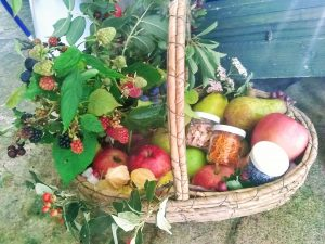 basket of produce including fruit collected by Hannah