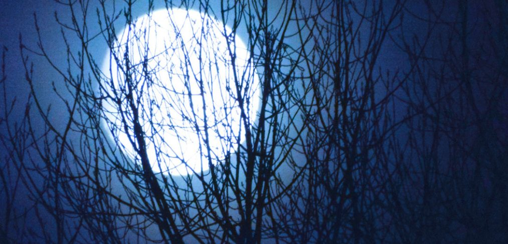 full white moon silhoutted behind trees branches and midnight blue sky