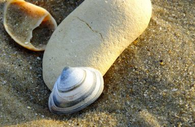 close up photograph of white pebble and grey and white shell on the sand