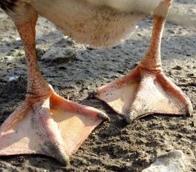 close up of seagull's feet