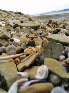 close up of pebbles and shells scattered at shoreline