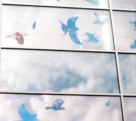 Bird silhouettes filled with cloud images, exterior view reflecting actual clouds on glass