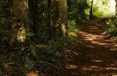earth path winding through woodland, sunlight breaking through