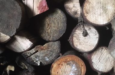 pile of log of various sizes viewed end on